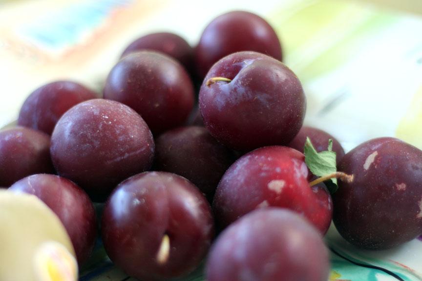 fresh-plums2