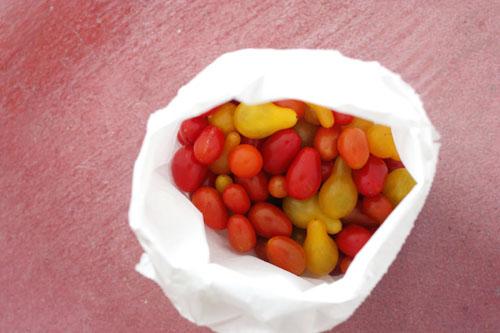 katie's tomatoes