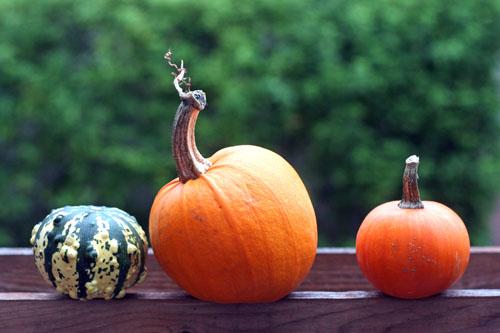 three little pumpkins web