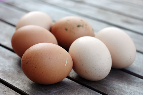 fresh eggs 1 web