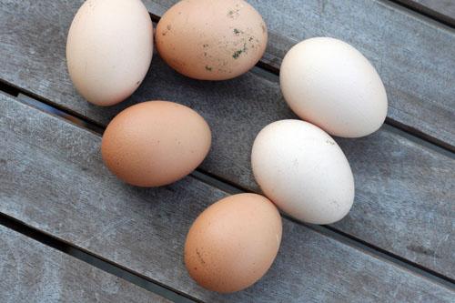 fresh eggs 2 web