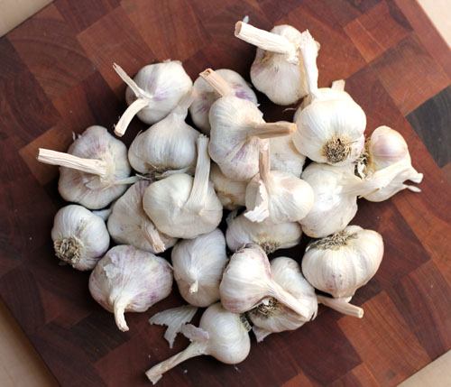 this week for dinner fresh garlic and lots of it this week for