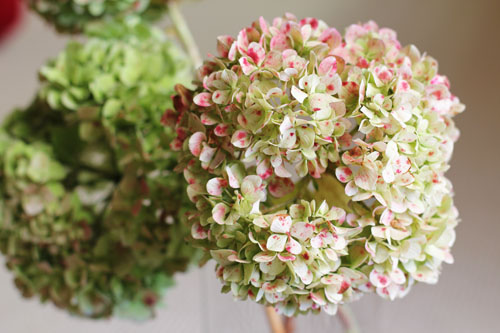 hydrangeas | thisweekfordinner.com