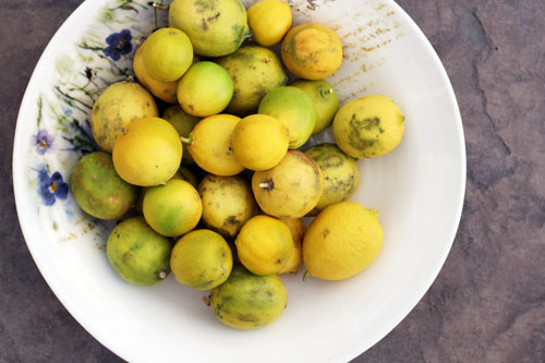 call for recipes: lemon recipes | thisweekfordinner.com