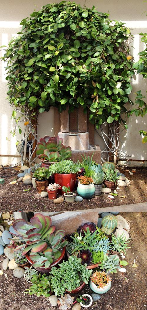 succulent garden | patio makeover by @janemaynard