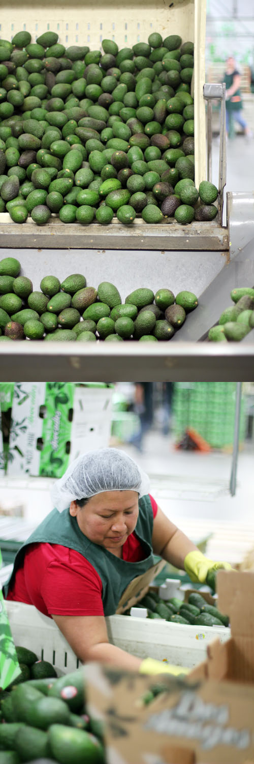 west pak avocado packing by @janemaynard