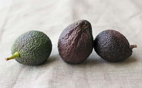 kitchen tip: how to store ripe avocados from @janemaynard