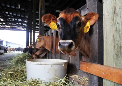 A Visit to Tillamook by @janemaynard #blog2farm