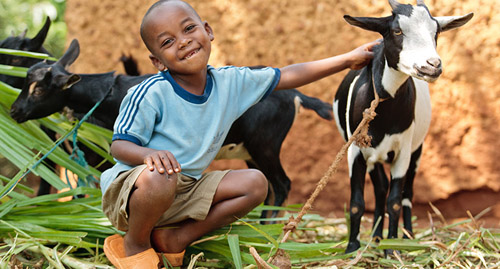 support heifer international this giving tuesday! #givingtuesday