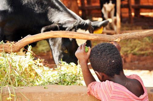 Snapshots from Malawi: Why I Love Heifer International