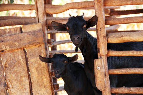 snapshots from malawi: the work of heifer international #oneheifer