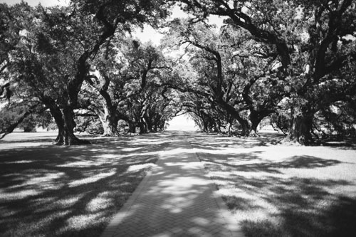 Oak Alley Plantation in Louisiana | Photo Credit: Cora Wallin