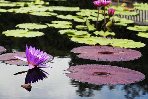 New Orleans City Park Botanical Gardens by @janemaynard